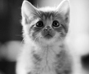 Sad-Kitten-300x250.jpg