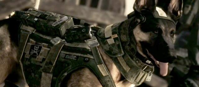 call-of-duty-dog